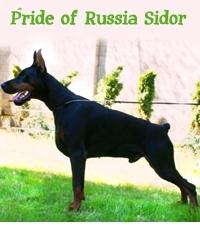 Pride of Russia Sidor